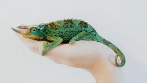 fazer seo exige adapatação camaleão verde em cima da mão